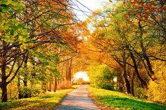 Outono, vista perfeita, paisagem, paisagem, estrada, árvores, Outono, natureza, árvores, queda, folhagem Vetor
