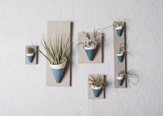 wall planter, ivory & teal