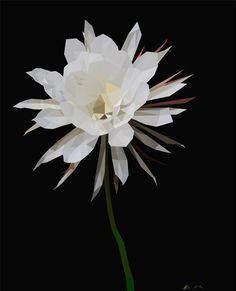 "D.Art (@d.art._)  Nightflower 🌙  #nightflower #illustration #illustrator #art #flower #flowers #whiteflower #instart…"""
