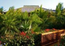 Lush tropical vegetation - Villa Alamandra www.villaalamandra.com