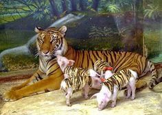 .Filhotes adotivos