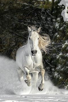 In A Cloud Of Powder Photograph by Wes and Dotty Weber Place To Shoot, Good Bones, Andalusian Horse, Mane N Tail, Horse World, White Horses, Canvas Prints, Art Prints, Horses