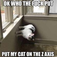 Stupid Funny Memes, Haha Funny, Hilarious, Best Memes, Dankest Memes, Reaction Pictures, Funny Pictures, Wubba Lubba, Doja Cat
