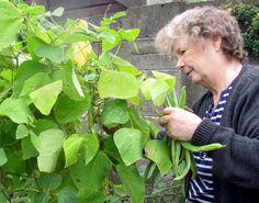 Growing Runner Beans, Growing Beans, Bean Trellis, Long Bean, Bean Plant, Small Gardens, Growing Vegetables, Gardening Tips, Vegetable Gardening