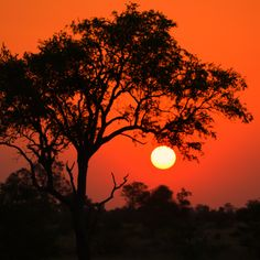 The most astonishing and breath taking scene to found on the African continent .Book a safari now and be the next to enjoy this. Safari Adventure, Fishing Adventure, Family Adventure, Kruger National Park, National Parks, Camping Tours, African Sunset, Wildlife Safari, Camping Organization