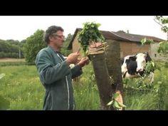 Marechal Film - La Greffe du Cerisier - YouTube