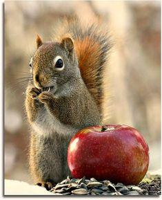 """seasonalwonderment: """" chasingrainbowsforever: """" ♥ """" Autumn """""""