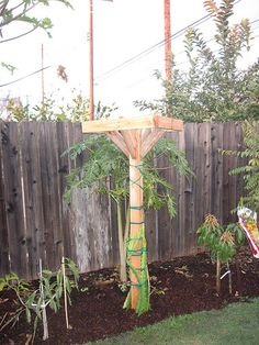 Best fruit trees landscaping how to grow 51 Ideas