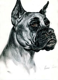 Boxer Vintage  print from Diana Thorne's Dogs by Artsag on Etsy, $18.00