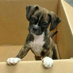 Pick me please...