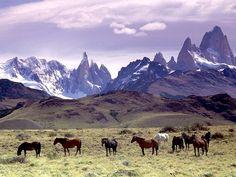 Chevaux dans la #pampa en #Patagonie