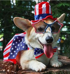 Wally the Welsh Corgi was the winner of our 2014 #PatrioticPets contest!