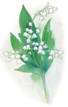 May Day Beauty: Lily of the Valley (illustrated by Heather Castles)