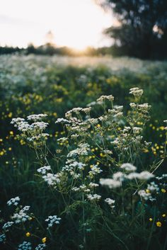 Mother Earth, Mother Nature, Pretty Flowers, Wild Flowers, Felder, Nature Aesthetic, Belleza Natural, Natural Wonders, Country Life