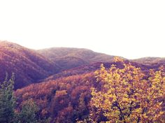 Autumn mountains — #nature #outdoors #forest #trees #autumn #leaves • VanStef on Streamzoo