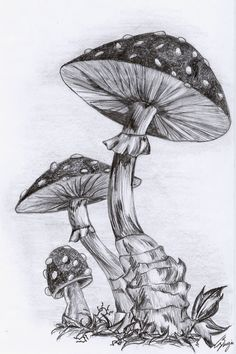 how to draw a mushroom | Mushrooms by nerissa-the-vampire on deviantART