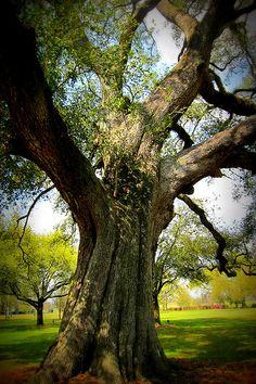 Bocage Plantation, Louisiana Louisiana Plantations, Louisiana Homes, New Orleans Louisiana, Dream Vacations, Vacation Spots, Pineapple Palm Tree, 4 Photos, Pictures, New Orleans Mardi Gras