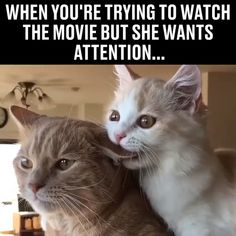 Chat veut attirer l& - HaHa - # veut - Katzen - Cute Funny Animals, Funny Animal Pictures, Funny Cute, Funny Pics, Super Funny, Hilarious, Cute Kittens, Cats And Kittens, Funny Kitties