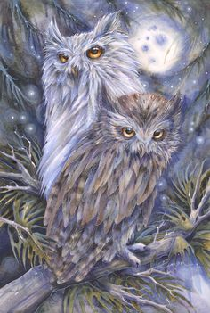 Night Watch artwork by Jody Bergsma: Owl Bird, Bird Art, Pet Birds, Owl Artwork, Owl Pictures, Illustration Art, Illustrations, Beautiful Owl, Animal Totems
