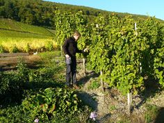 Enoturismo, viñedos. naturaleza, relax origenes