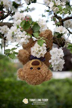 """Gund Valentine Bear Little Honeybunch 8/"""" NEW"""