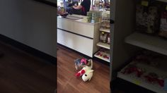 This Dog's Favorite Thing To Do Is Shopping – For Toys Of Course