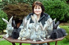 Since rabbits are not so expensive anyway, financially it is more prudent to breed only from purebred animals of sound type.