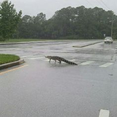 Just another day in Florida.