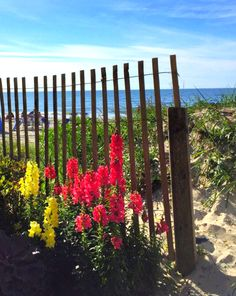 Springtime in Myrtle Beach, South Carolina | Photo via IG user @macslads