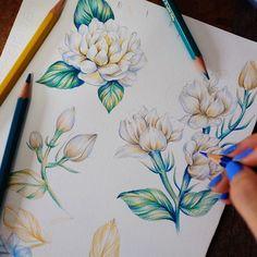 faiirivyscurly Jasmines #illustrations #flower #jasmine drawing