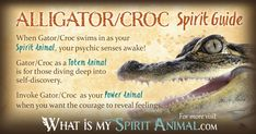 Get in-depth Alligator & Crocodile Meaning & Symbolism! Meet Alligator & Crocodile as your Spirit, Totem, & Power Animal. A powerful animal spirit guide! Spirit Animal Totem, Animal Spirit Guides, Your Spirit Animal, Animal Totems, My Spirit, Animal Meanings, Animal Symbolism, Raven And Wolf, Dream Meanings