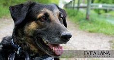 Hundetuch mit Reflektorstreifen in blau-weiß. Auch toll beim Buddeln!