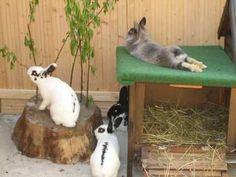 relaxed rabbit – Hobby Sports World Rabbit Hutch And Run, Rabbit Shed, Bunny Hutch, Rabbit Life, Rabbit Hutches, Bunny Rabbit, Bunny Cages, Rabbit Cages, Rabbit Playground
