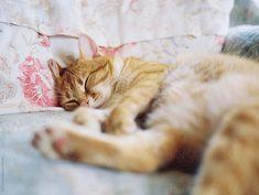 Like A Cat, Ginger Cats, Close Up, Sleep, Sofa, Stock Photos, Film, Animals, Movie