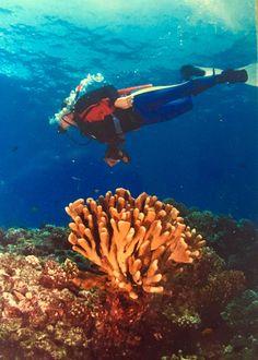 Artist~ Robert Lyn Nelson  Diving-MAUI 1989  David Fleetham Photo  @robertlynnelson.com