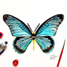 "Day 69 of my challenge #100daybutterflies #100daychallenge is inspired by ""Papilio Zalmoxis"" can be found in Liberia, Ghana, Cameroon, Nigeria, Gabon, Democratic Republic of the Congo, Zaire and Ivory Coast  #triplesartists #art_empire #imaginationarts #artoftheday #arts_help #challenge #art  #illustration #butterfly #handdrawnart #yellow #nature #phooftheday #doodle #love #bw #rtistic_feature #featuregalaxy #allforarts  #me #worldbutterflies #happy #watercolor #acrylic #paint #fly #phanasu…"