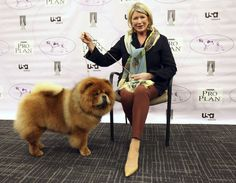 Martha Stewart sits her with her dog GK, a Chow Chow, before competing in the Best of Group category...