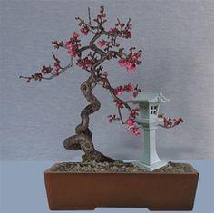 Ume Bonsai Garden, Flora, Candle Holders, Trees, Candles, Interview, Tree Structure, Plants, Porta Velas