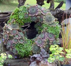 Succulents Living Wreath from Simply Succulents