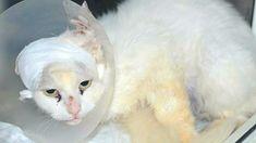 Все думали, что эту кошку обидели, но реальность оказалась ещё суровее…