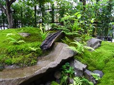 Beautiful way to distinguish between the layers. Looks very natural! Zen Rock Garden, Moss Garden, Water Garden, Little Gardens, Small Gardens, Outdoor Gardens, Simple Garden Designs, Japanese Garden Design, Japanese Gardens