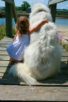 I love big dogs too! Pyr's and cav's : a marriage made in heaven!