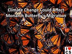 Climate Change Vs. Monarch Butterflies. Not A Fair Contest.