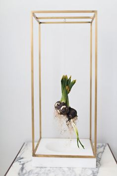 Plant Bondage — Light + Ladder