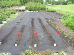 1000+ Images About Inch By Inch Row By Row On Pinterest | Companion Planting Guide Rhubarb ...