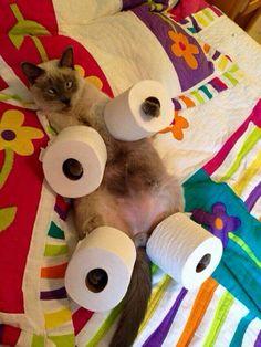 Funny cat Lol :D
