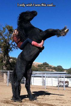 I want that horse