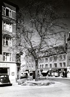 """""""Majtræet"""" Valby Tingsted. Hvem der har fundet på udtrykket, er usikkert.  Men det er forholdsvis nyt og har næppe rod i nogen tradition."""
