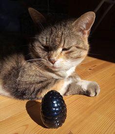 Mirtusz Melinda (@mirtusz_szivderito_alkotasok) • Instagram-fényképek és -videók Cats, Animals, Instagram, Gatos, Animales, Animaux, Animal, Cat, Animais
