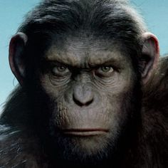 CONTEST: Win Black Friday Blu-Rays Including Black Swan and Rise of the Planet of the Apes - Fox Home Entertainment is giving you a head start on Black Friday by giving away these hot Blu-ray titles.